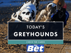 romford dogs betting on sports