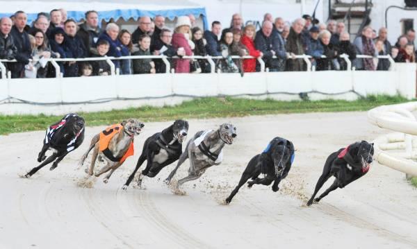 Greyhound Racing | The Bet | Dogs | Racing