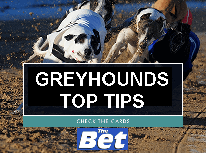 Romford dogs betting odds best website for betting on sports
